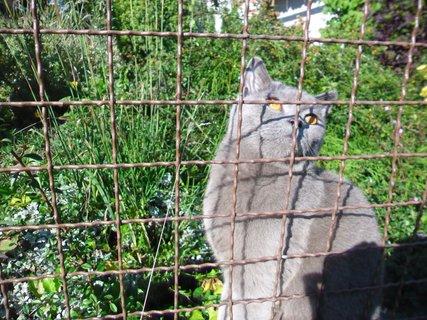 FOTKA - kočka za plotem