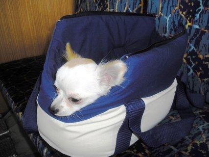 FOTKA - Niki se probírá ze spánku