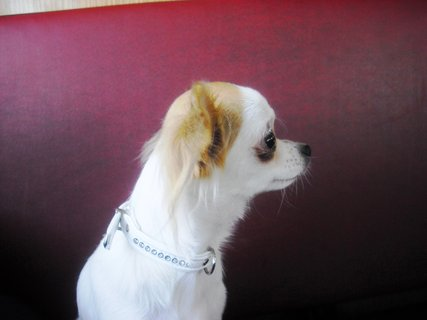 FOTKA - Foto z profilu