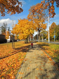 FOTKA - zlat� podzim v sobotu ve m�st�,