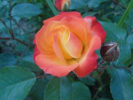 FOTKA - 12.10.2013 oranžová kráska
