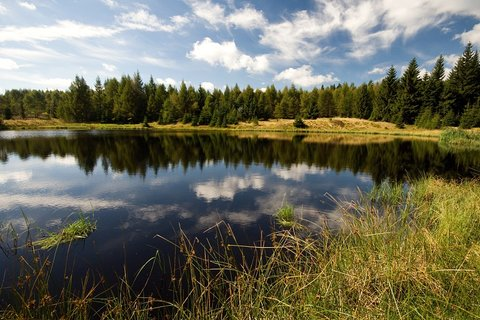 FOTKA - Červený rybník