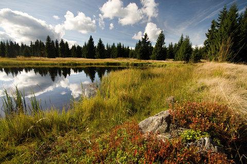 FOTKA - Na břehu Novoveského rybníka