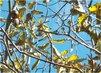 14.10. - 13.10. - 4 - až k nebi rostu - ještě mám stále ořechy