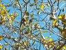 14.10. - 13.10. - 5 - až k nebi rostu - ještě mám stále ořechy