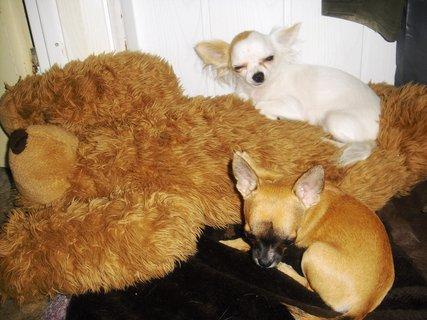 FOTKA - I pes má rád svoje hračky