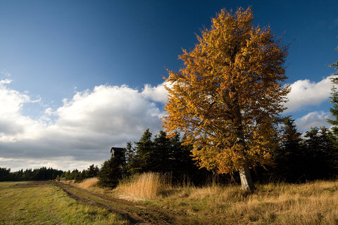 FOTKA - Cestou ke Kl�nsk� br�n�