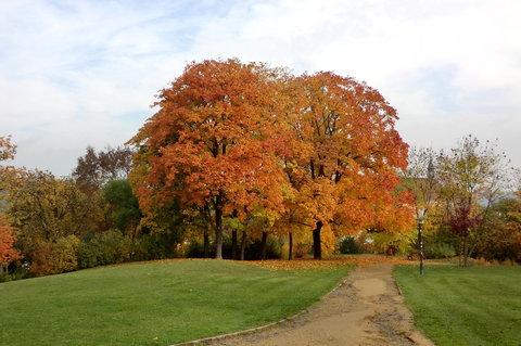 FOTKA - Skupina stromů