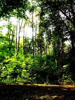 FOTKA - Vzpomínka na letní procházku lesem