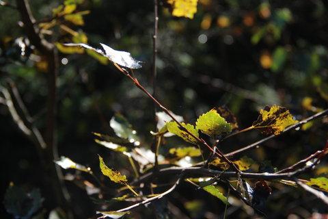 FOTKA - Slunce mezi listím