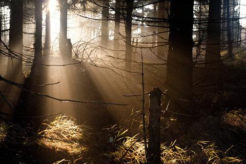 FOTKA - Světlo v temném lese