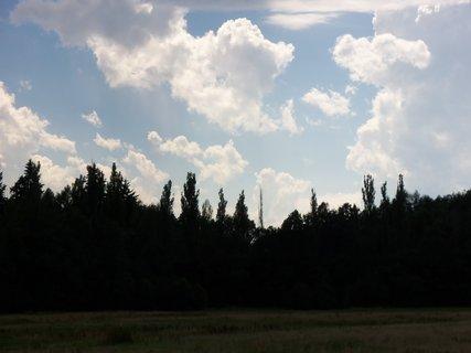 FOTKA - naše lesy 10