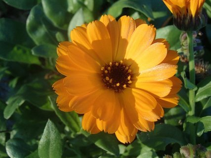 FOTKA - stále kvitne