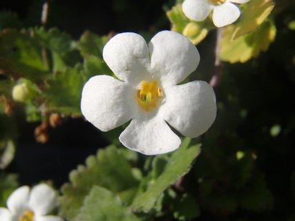 FOTKA - biely drobný kvietok