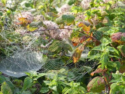 FOTKA - na orosene pavucince