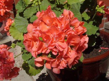 FOTKA - ešte stále kvitne