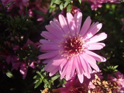 FOTKA - polovica kvetu v tieni