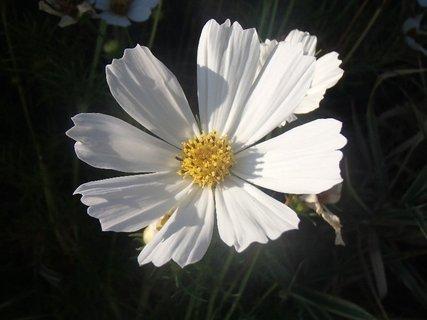 FOTKA - biely posledný