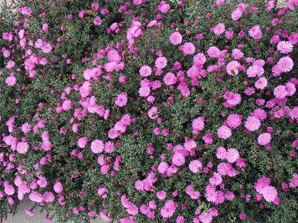 FOTKA - keď rozkvitnú všetky, bude to ako koberec
