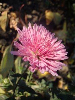FOTKA - vztýčená hlavička kvetu