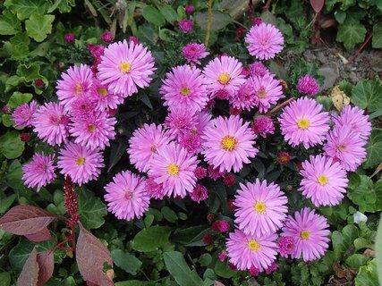 FOTKA - kvitnú v záhradke