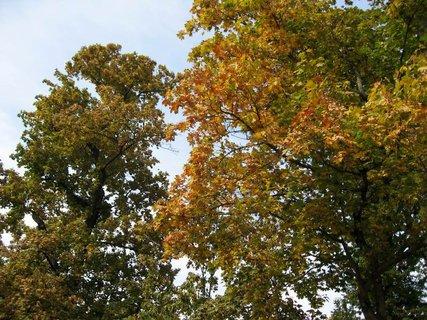 FOTKA - Vzpomínka na  podzimní den 10