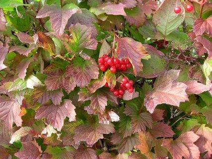 FOTKA - Vzpomínka na podzimní den 15