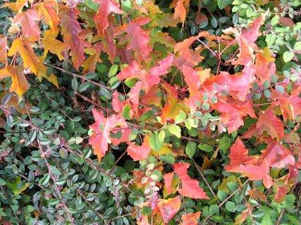 FOTKA - Vzpomínka na podzimní den 16