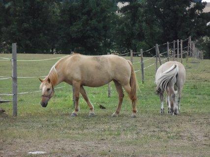 FOTKA - koně v ohradě 3