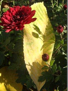 FOTKA - kvet a tiene na liste
