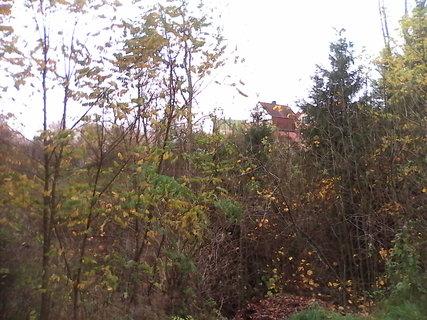 FOTKA - stromy na podim