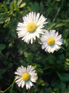 FOTKA - našla som ich v tráve