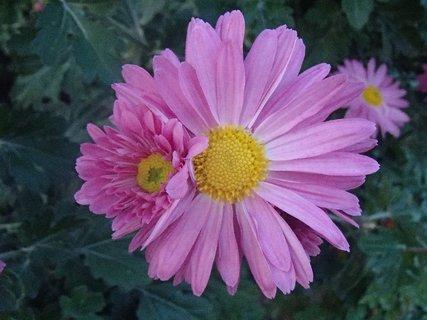 FOTKA - vytŕčajú z nej malé kvety