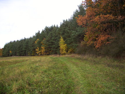 FOTKA - Cesta do lesa i z lesa