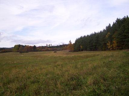 FOTKA - U lesa 1