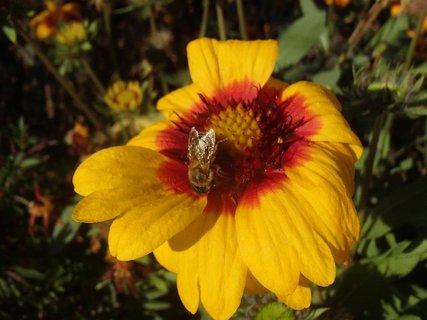FOTKA - kokarda so včeličkou dnes na obed