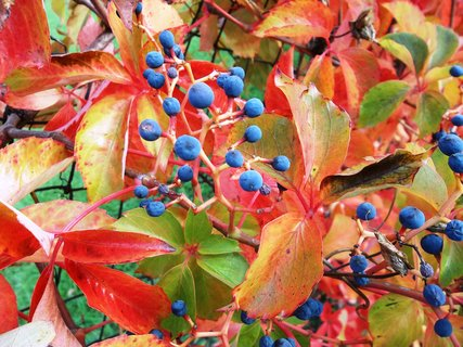 FOTKA - barvy podzimu.. 30