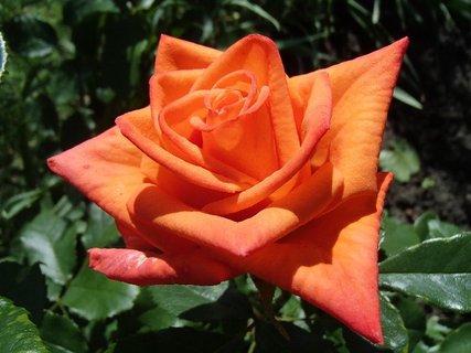 FOTKA - má špicaté lupene