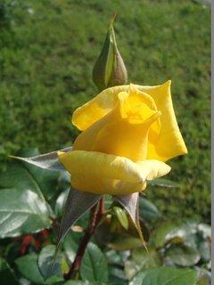 FOTKA - žltá na slniečku