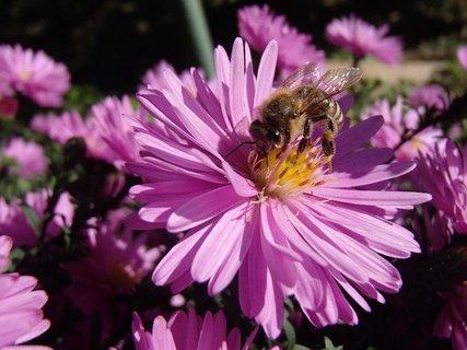 FOTKA - včielky ešte lietajú