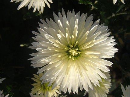 FOTKA - biela hlavička