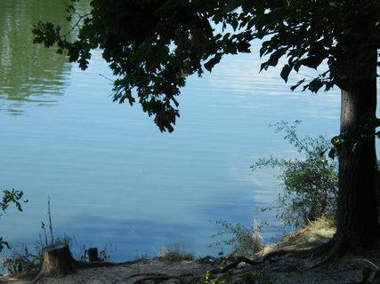 FOTKA - pařez u vody