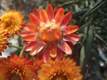 FOTKA - oranžová slamienka