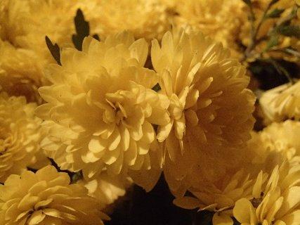 FOTKA - samé žlté