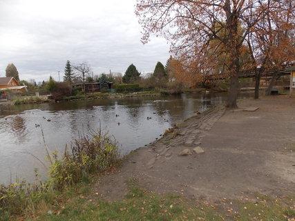 FOTKA - Kačky na břehu i ve vodě
