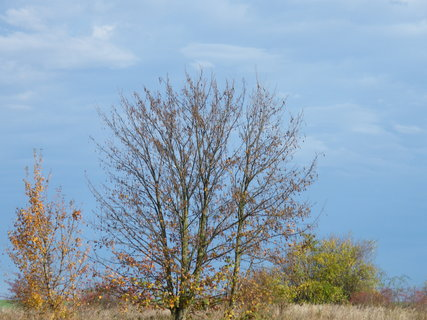 FOTKA - strom a obloha