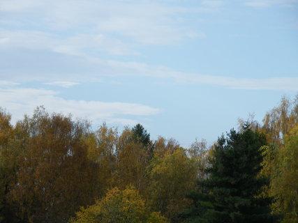 FOTKA - Obloha se stromy
