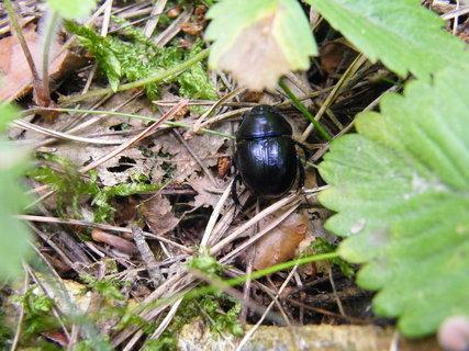 FOTKA - chrobák pod listem