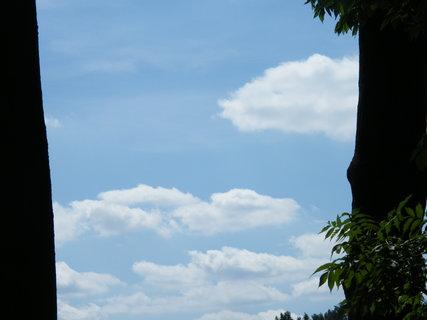 FOTKA - obloha mezi stromy