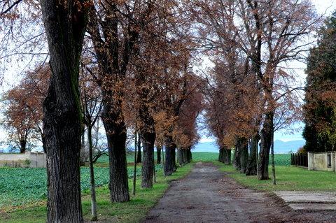 FOTKA - Lipová alej, končící u bývalého židovského hřbitova